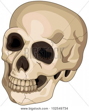 Illustration of Halloween skull