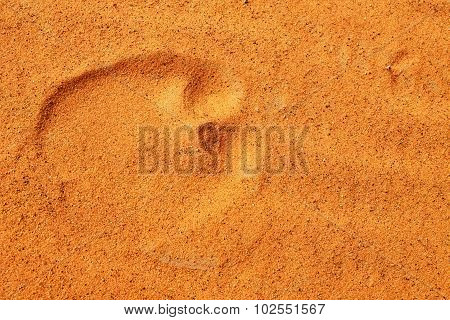 Footsteps In Sahara