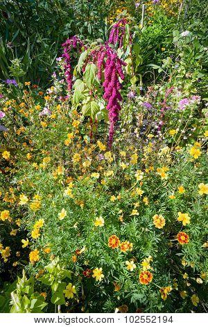Casual Flowery Garden