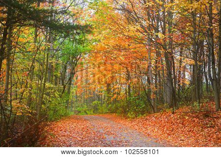 Bike trail through colorful autumn tress
