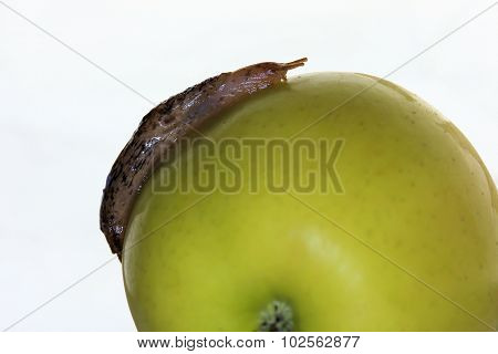 Slug on Apple