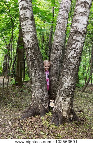 Little Girl With Tails Hiding Behind The Trunk Of Birch