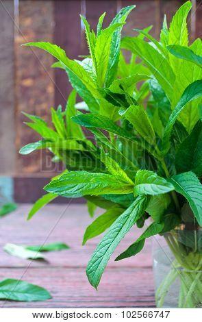 Fresh mint bunch on garden table