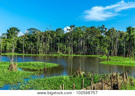 Wetland in Amazon, Brazil