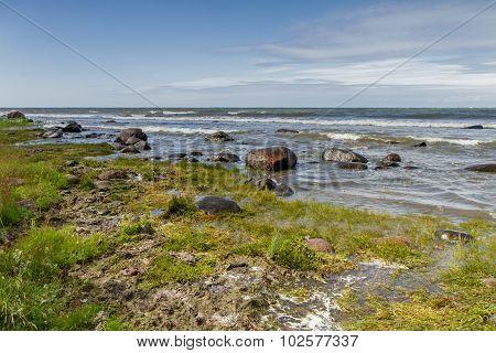 Grass In Sea