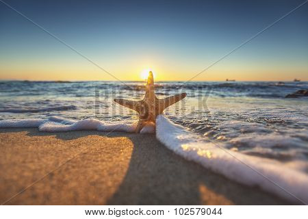Starfish On The Beach At Sunrise