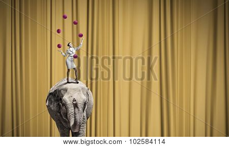 Young businesswoman standing on elephant and juggling with balls