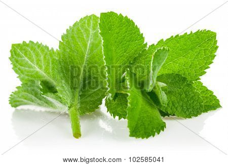 Fresh green leaf mint. Isolated on white background
