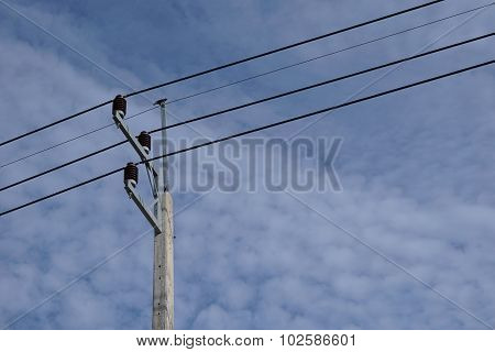 Abstract Electric Wire With Bird