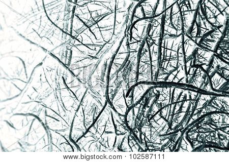 Abstract Root Of Lemongrass