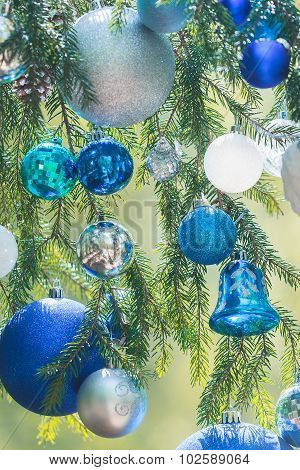 Christmas shades of blue color gamma baubles hanging on natural spruce twigs