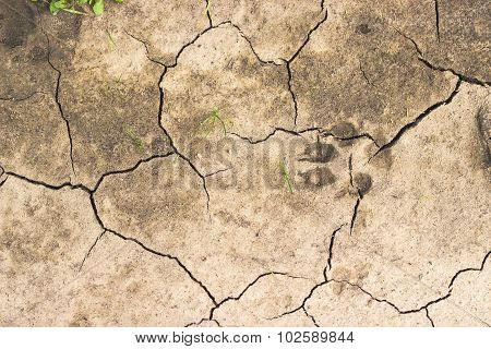 Chapped Ground With Dog Track