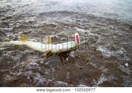 Pike Fishing Northern Fish