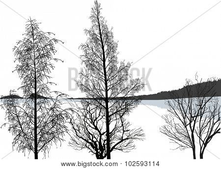 illustration with bare trees near grey lake