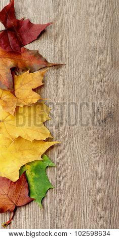 Frame Of Maple Leafs
