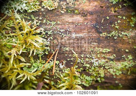 Old Moss-covered Wood