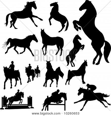 horses - vector