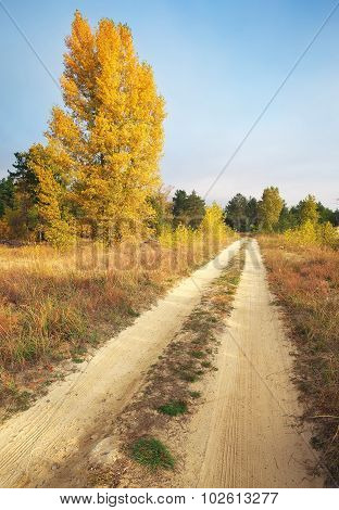 Autumn. Forest In Autumn. Autumn Trees And Leaves In Sun Light. Autumn Scene