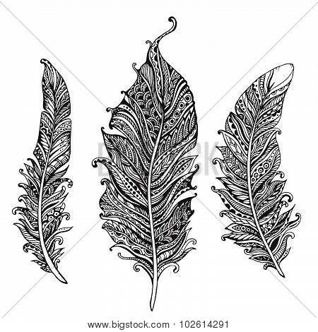 Hand Drawn Stylized Feathers Black And White Vector Collection