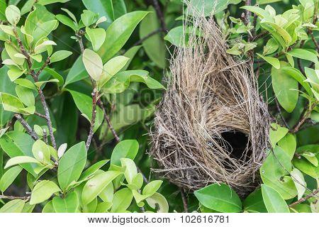 Empty Bird Nest On Tree