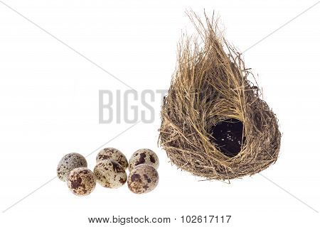 Quail Eggs And Nest Isolated On White Background