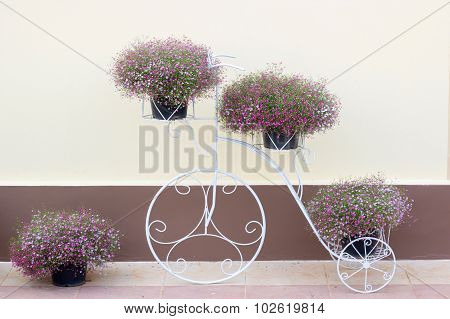 Gypsophila Flower  On Bicycle Stell Frame With House Wall
