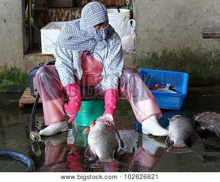 Fishmonger Cleans A Large Fish