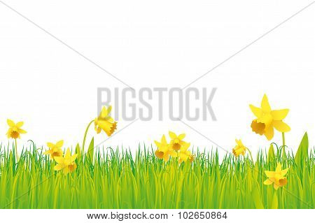 Grass And Daffodils Background