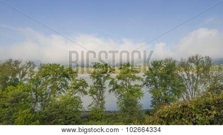 River Shoreline Landscape. Maple Trees, Watercress. Fog.