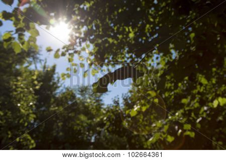 The Sun Behind Leaves In Summer, For Backgrounds