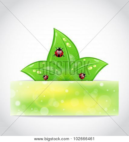 Eco leaves with ladybugs sticking out of the cut paper