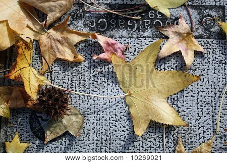 Fall Leaves on Metal