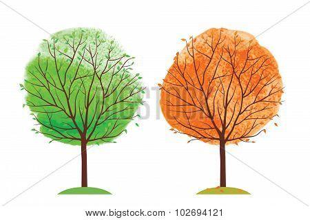 Summer and autumn tree.