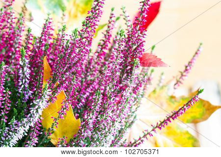 Heather and autumn leaves abstract floral still life