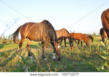 Horse herd in green field