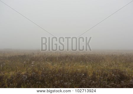 Thick Fog In Autumn Morning