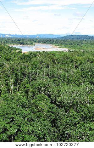Amazon Forest, Bolivia