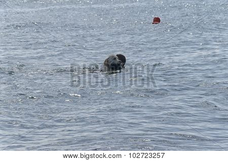 Dog Brings The Instructor Out Of The Sea