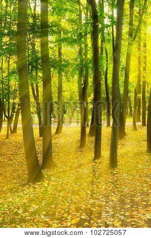 Autumn Sunset Landscape