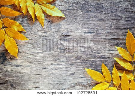 Yellow Leaves Backdrop