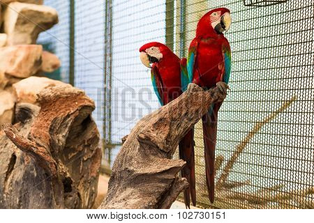Red Macaw Bird Sitting On The Perch