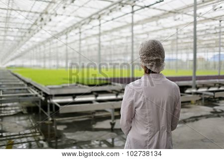 Portrait Of Back Female Scientist Researching Plants And Diseases In Greenhouse With Greenhouse