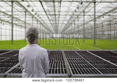 Close-up Back Biotechnology Woman Engineer Examining A Plants For Disease From Greenhouse Farm