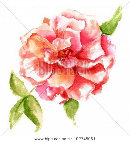 A vintage style watercolour drawing of a bright red rose on white background