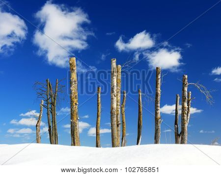 barren trees against sky background