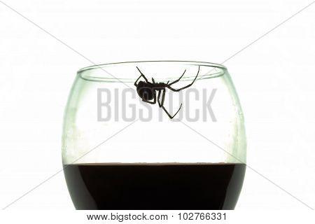 Black Widow Spider in Wine Glass