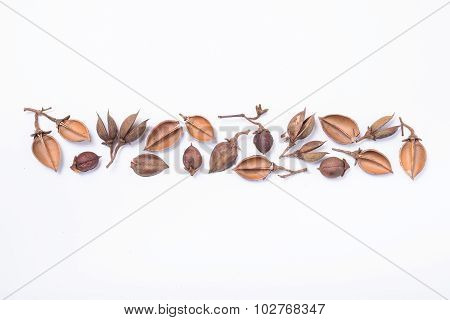 Tree Seed Pods Arranged In A Pattern