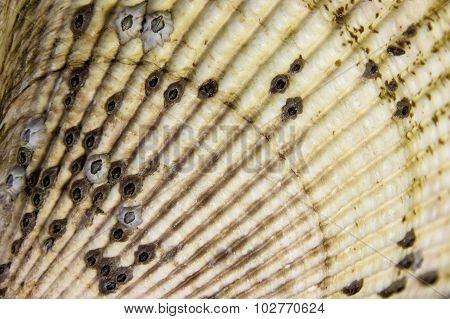 A Shell Fan