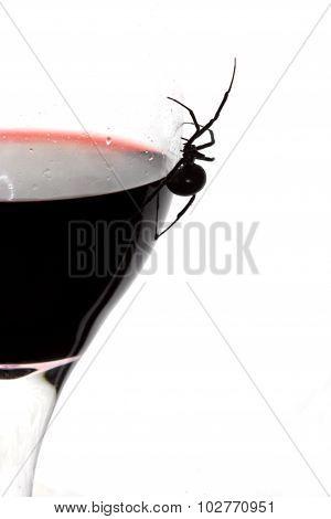 Black Widow Spider on Wine Glass