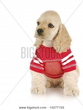 Puppy Wearing Red Shirt